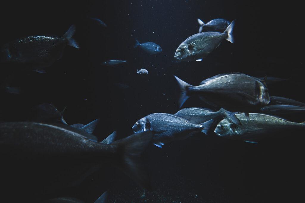 peces en los océanos